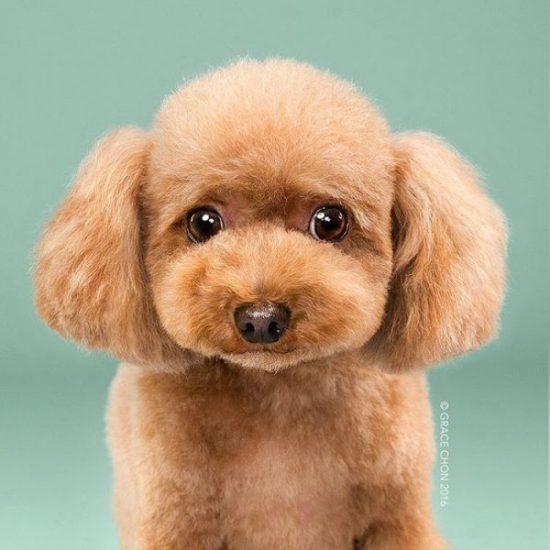 dog-grooming-photography-1