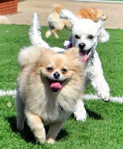 dogs in pet-resort
