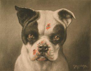 dog-bad-behaviour